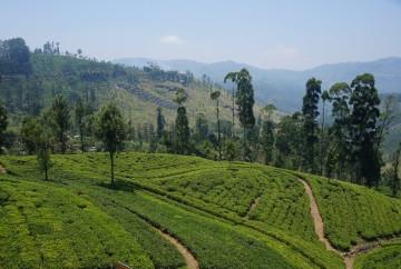 Magnifique Sri Lanka