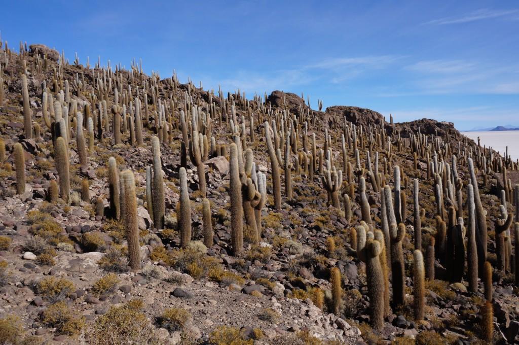 Désert de sel - Isla Inca Huasi