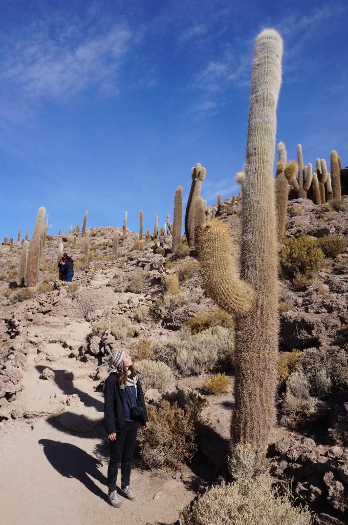 Cactus - Isla Inca Huasi
