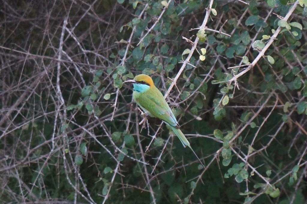 Safari sri lanka oiseau