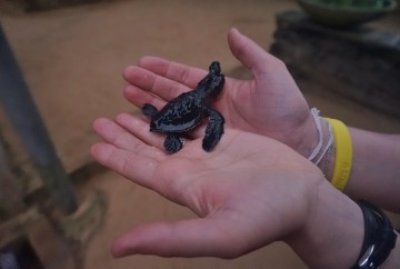tortue Sri Lanka