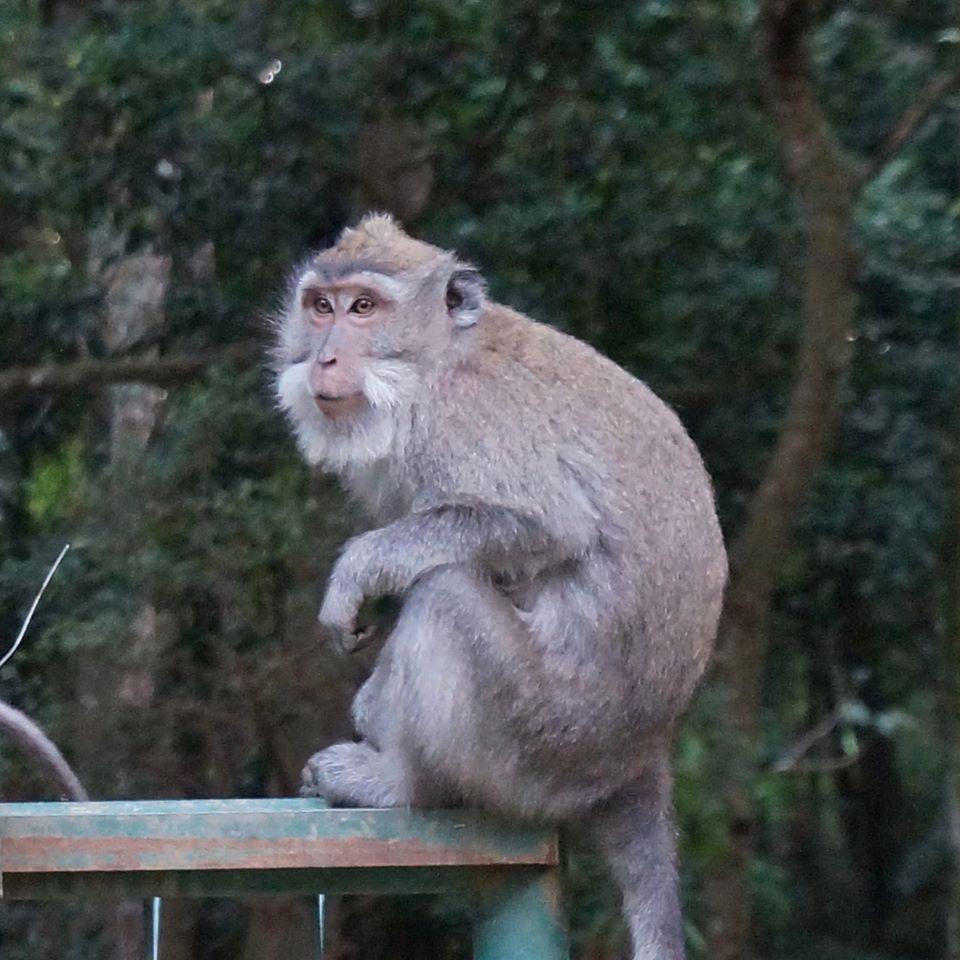 foret sacrée des singes bali ubud