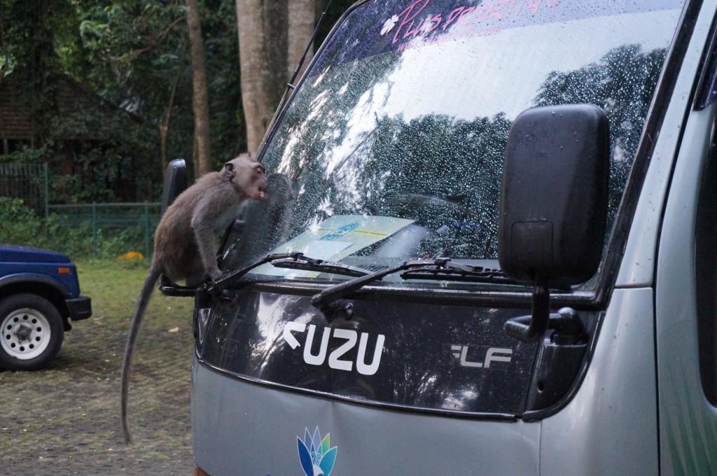Foret sacrée des singes ubud bali