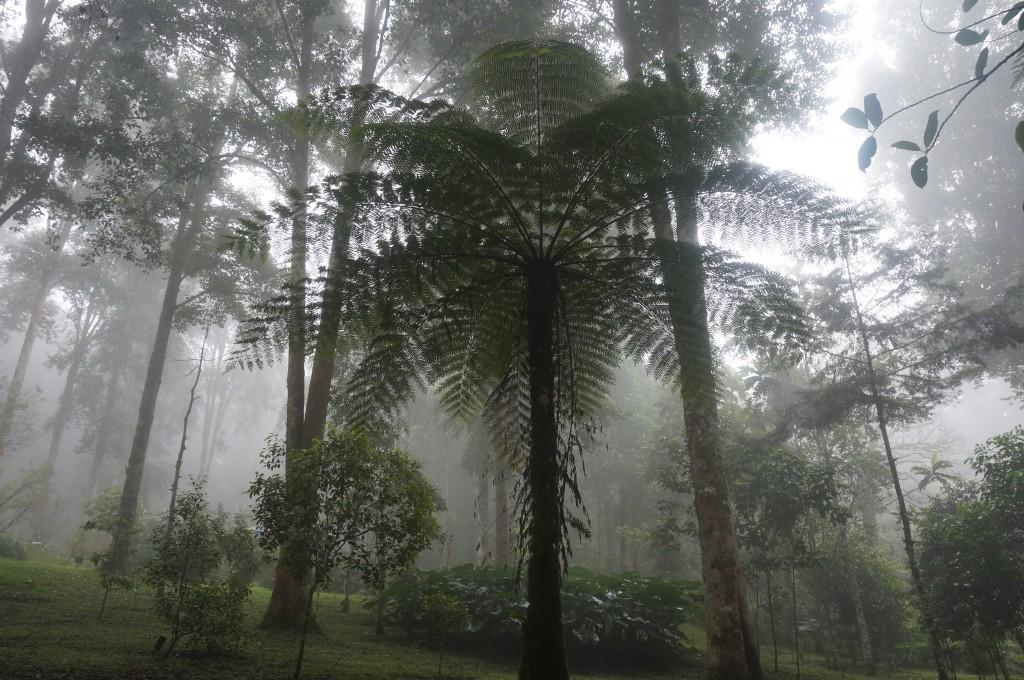 Jardin botanique Bedugul Bali