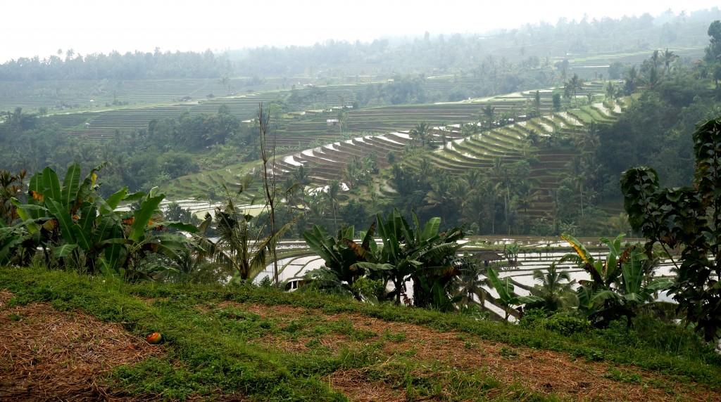 rizières de Jatiluwih Bali