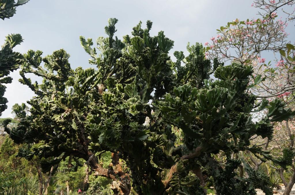 jardin botanique java bogor