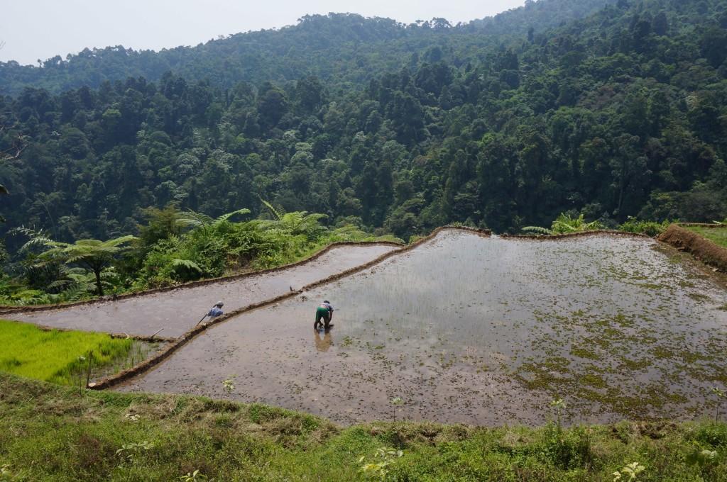 Bogor Java