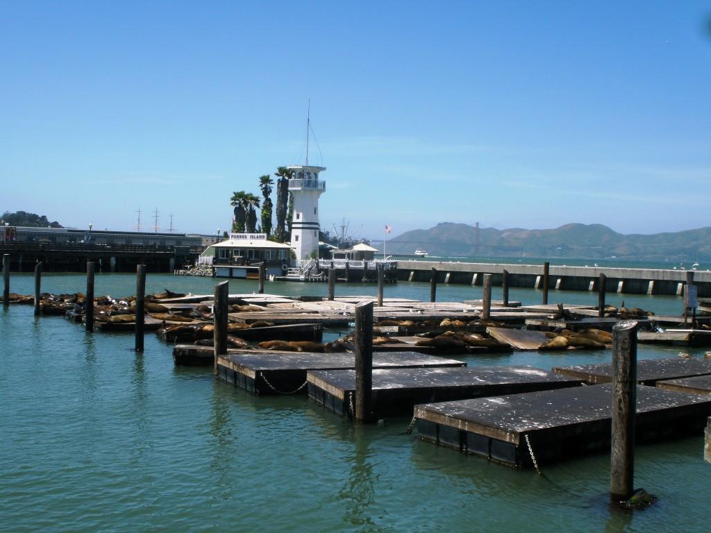Phoques de San Francisco