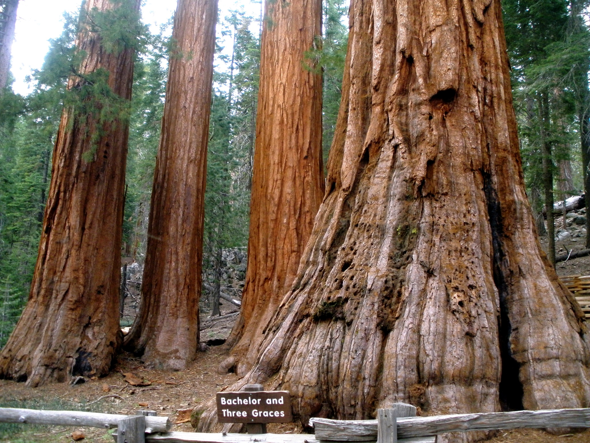 how to get to sequoia national park from los angeles