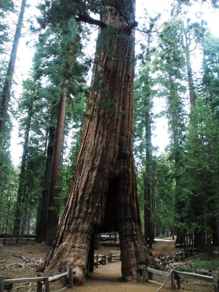 Séquoia Park