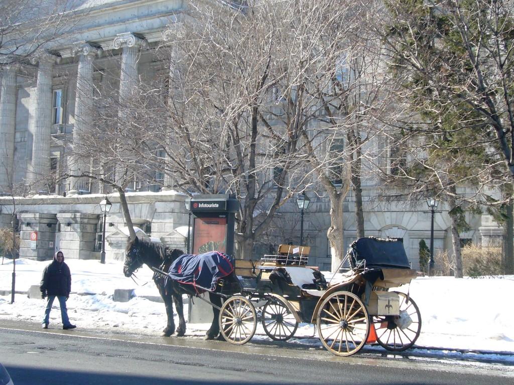Calèche devant Musée de la banque de Montréal