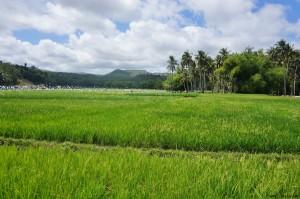 Siquijor philippines rizières