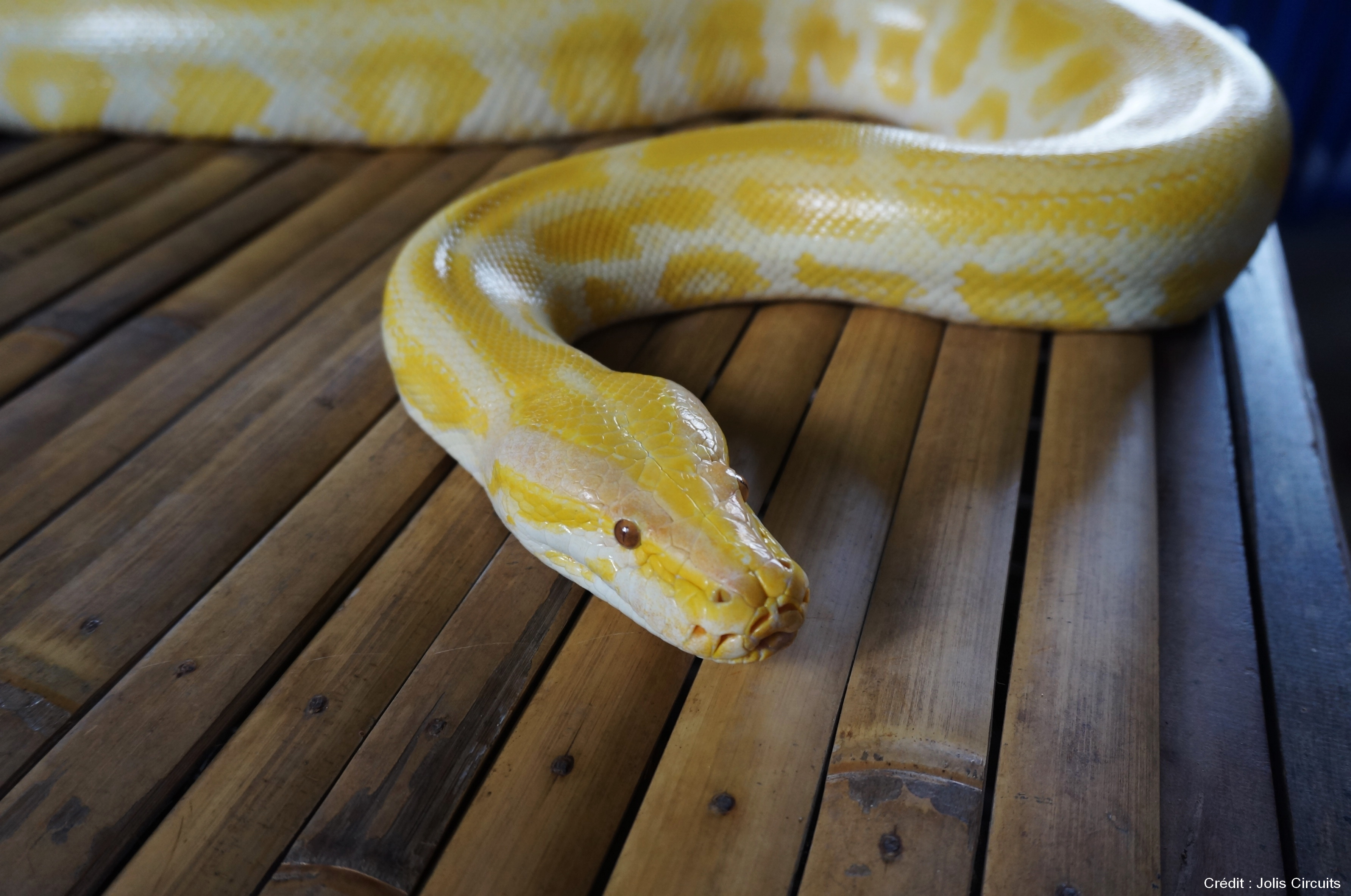 serpent philippines bohol