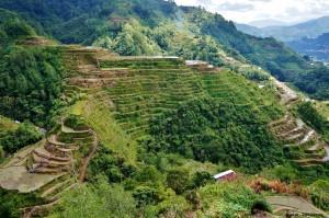 Rizières Banaue Philippines