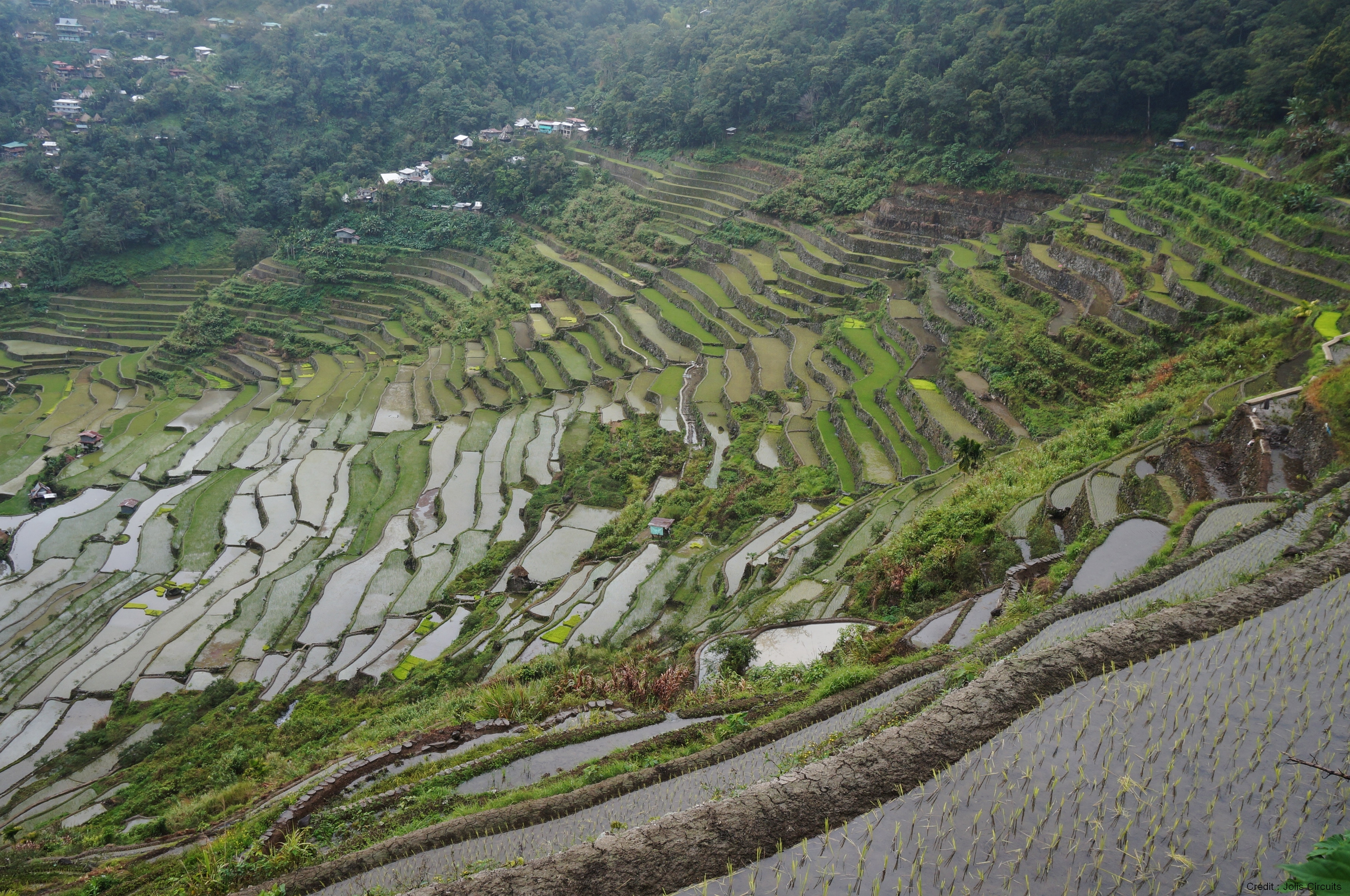 Rizière Batad Philippines