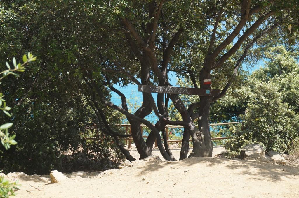 vernazza italie 5 terre sentier parc national