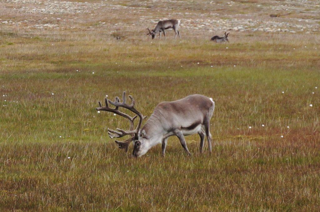 Svalbard longyearbyen arctique challenge rennes
