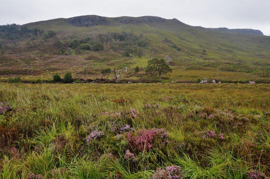 Wester ross ecosse A896 Torridon