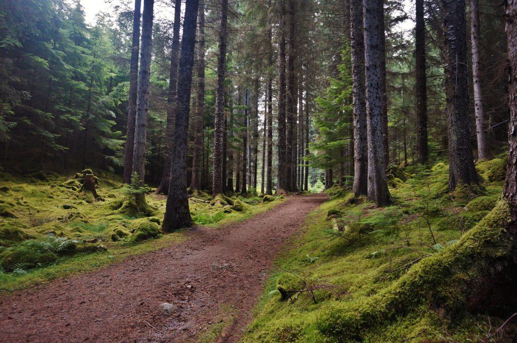 Inverfarigaig ecosse route B62 loch ness