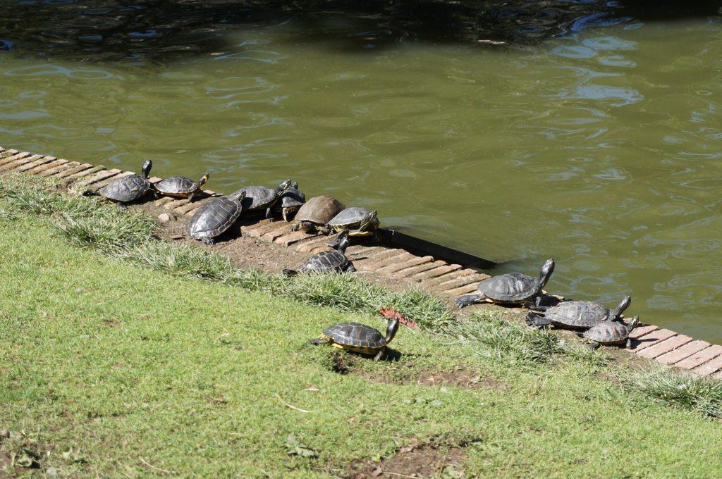 madrid espagne parque del retiro palacio de cristal tortues
