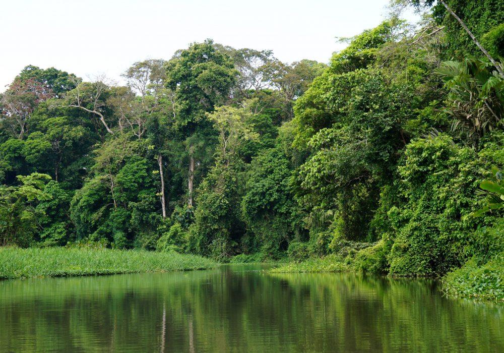 Canoé dans le parc national de Tortuguero - Costa rica
