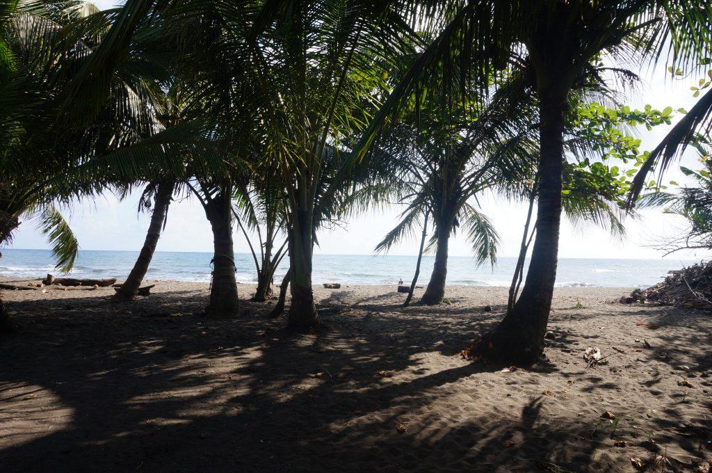 plage village tortuguero costa rica