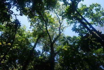 forêt parc national tortuguero costa rica
