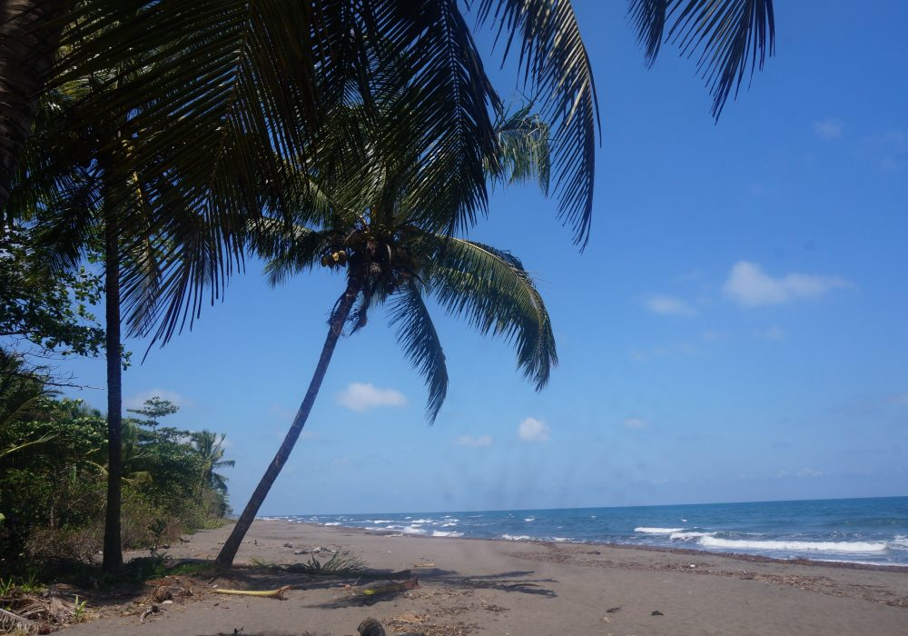 Plage - Parc national de Tortuguero - costa rica