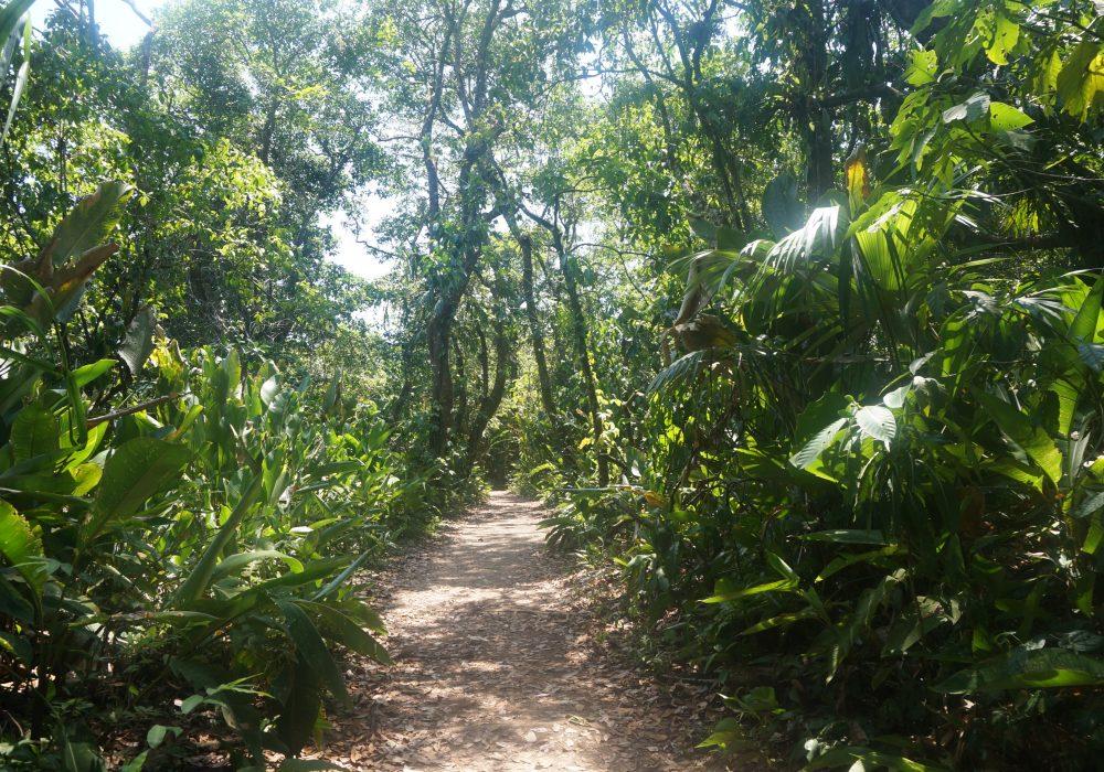 foêt Parc national de Tortuguero - costa rica