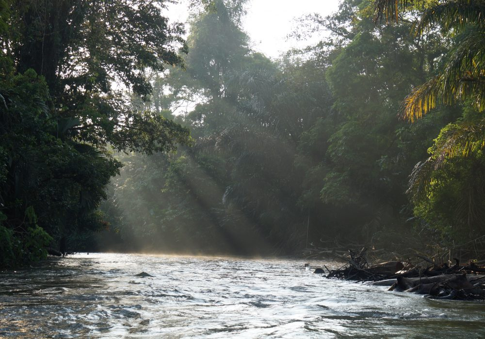 Parc national de Tortuguero - Costa rica