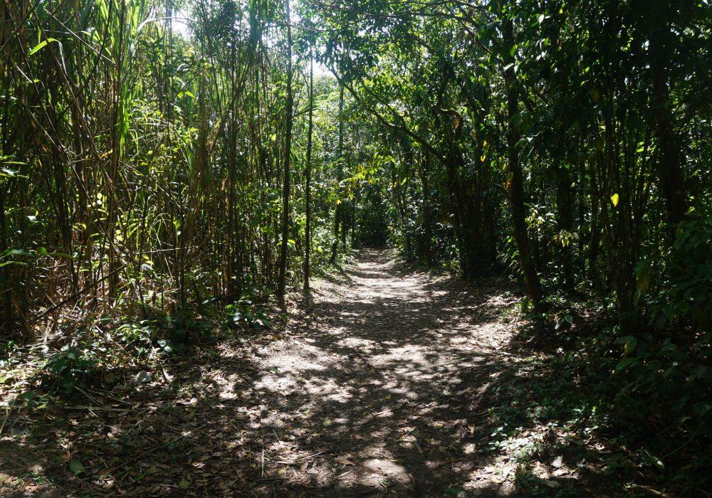 Parc naturel du volcan Arenal - costa rica