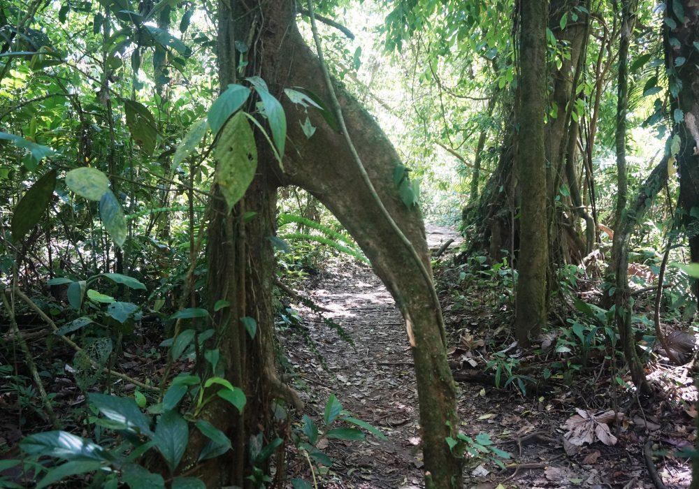 Forêt primaire - Parc naturel du volcan Arenal - costa rica