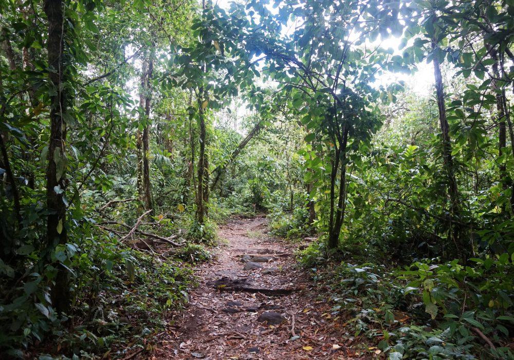 Forêt primaire de l'Arenal Observatory lodge - costa rica