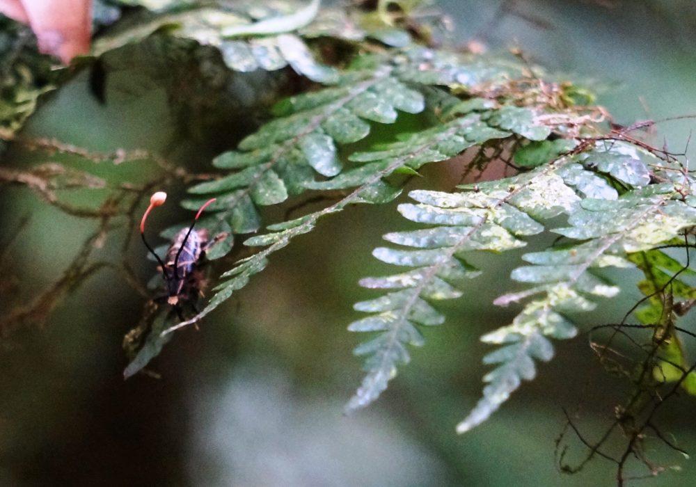 Insecte - réserve de monteverde - costa rica