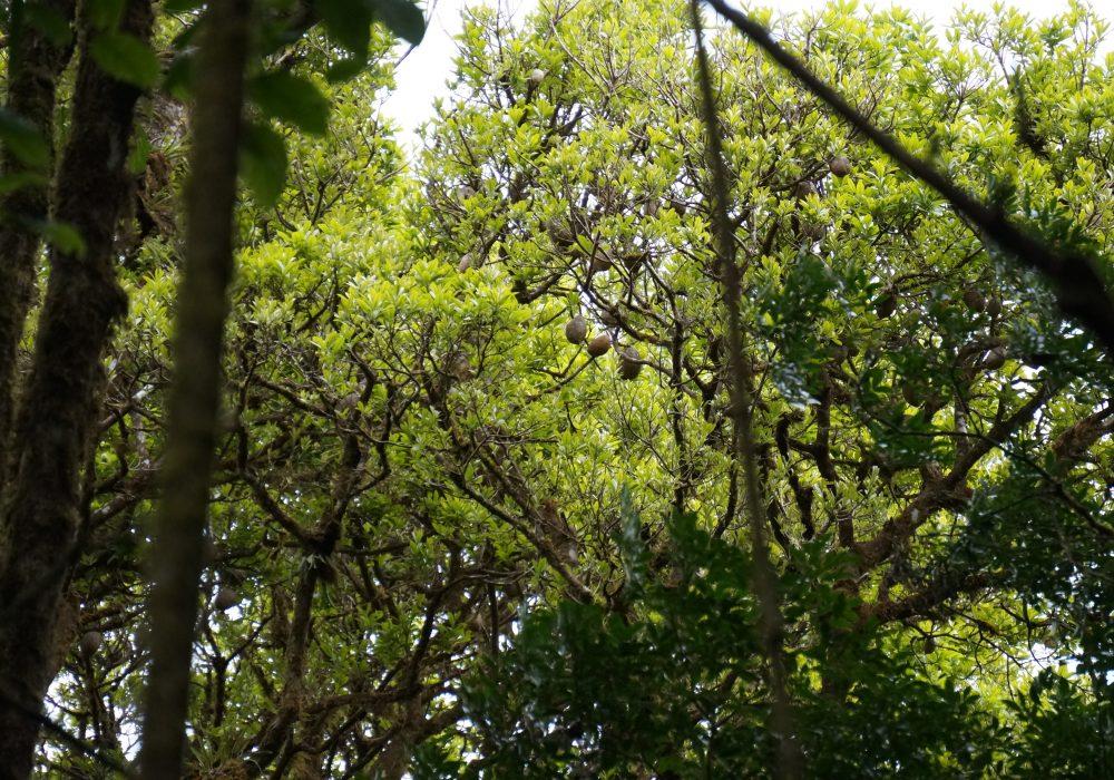 Forêt primaire de la réserve de monteverde - costa rica