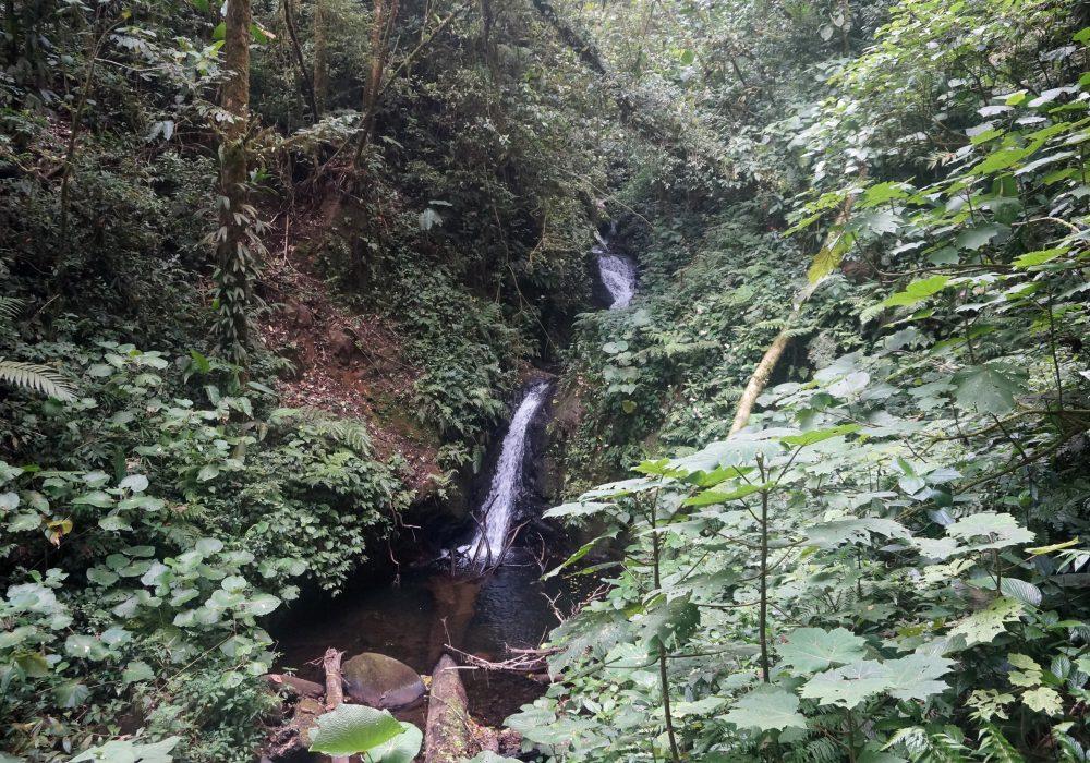 Cascade de la réserve de monteverde - costa rica
