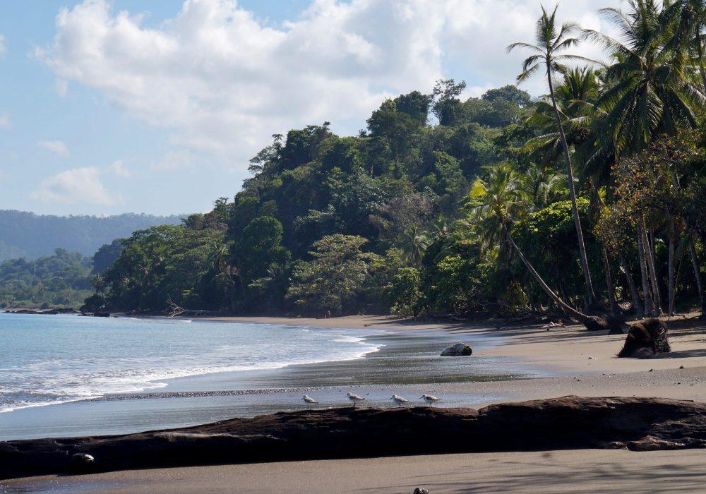 Plage de Bahia Drake - Corcovado - Costa rica