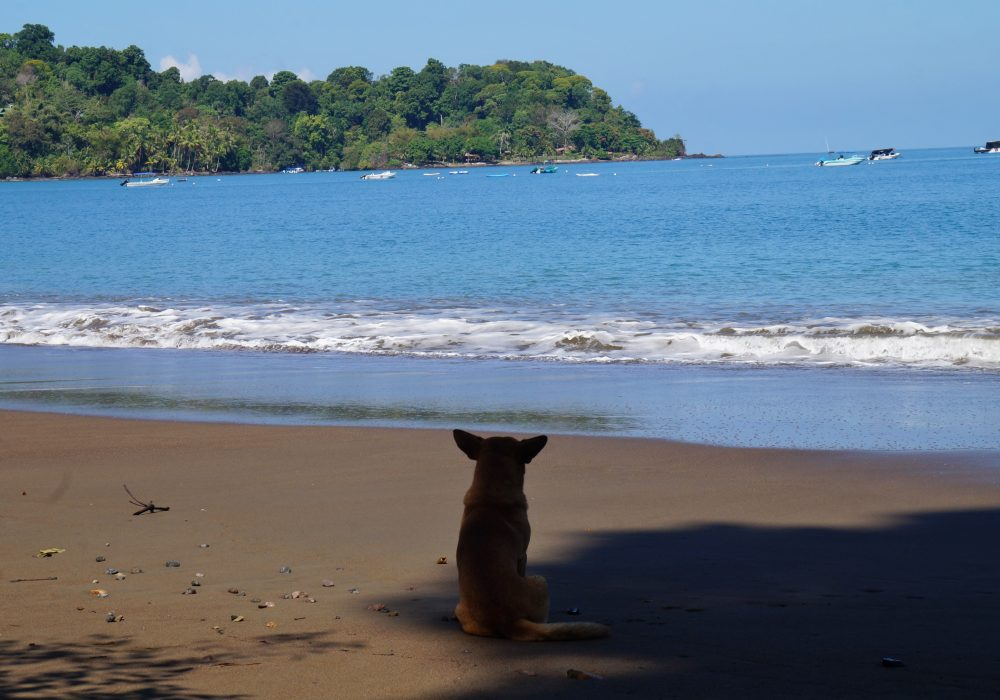 Plage de Bahia Drake - péninsule d'Osa - Corcovado - Costa Rica