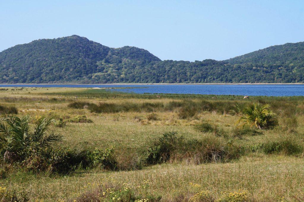 Réserve iSimangaliso Wetland Park, st lucia, afrique du sud