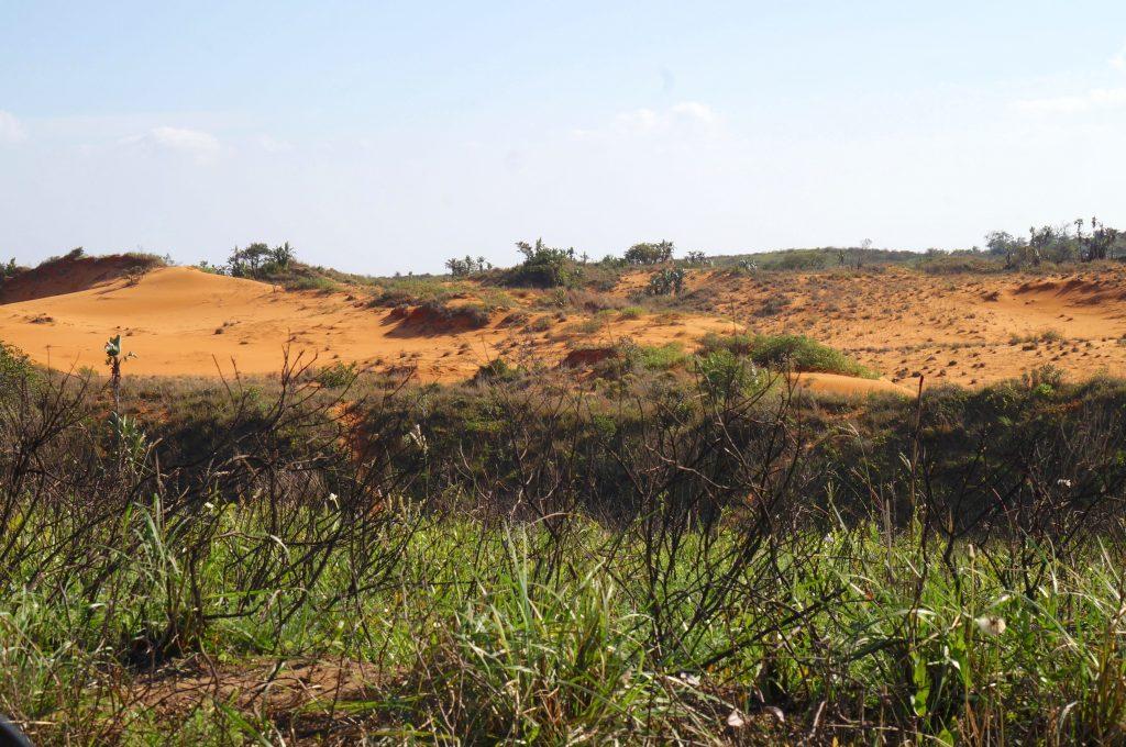 Red dune, Réserve iSimangaliso Wetland Park, st lucia, afrique du sud