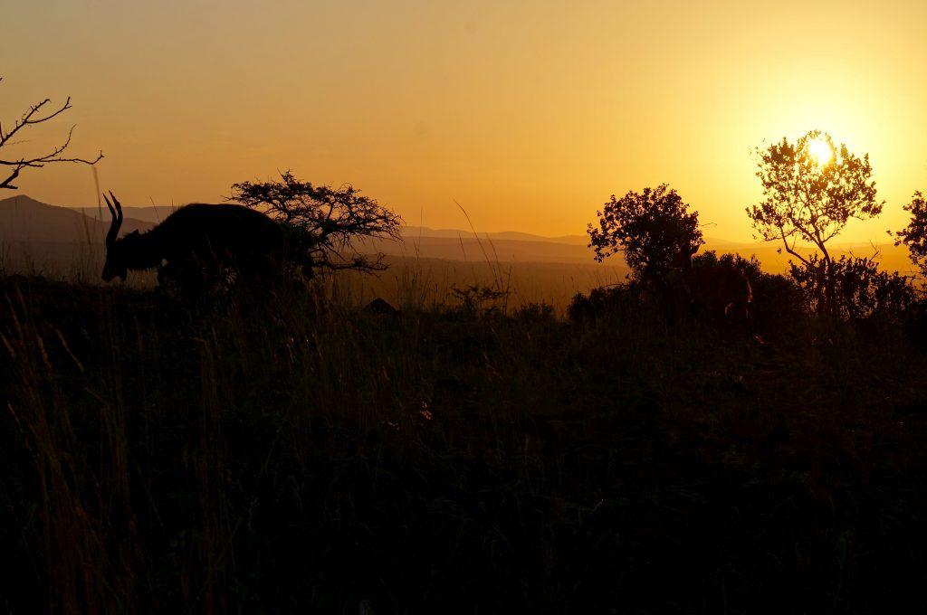 Coucher de soleil, Lodge Zulu Nyala heritage, afrique du sud