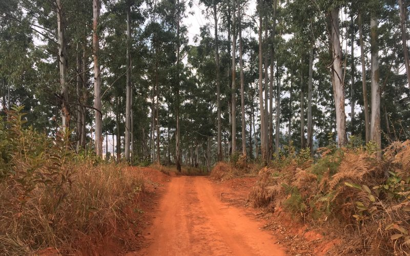 Forêt, Mlilwane wildlife sanctuary, Swaziland