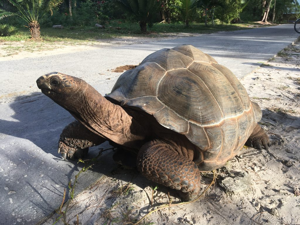 tortue géante, la digue, seychelles