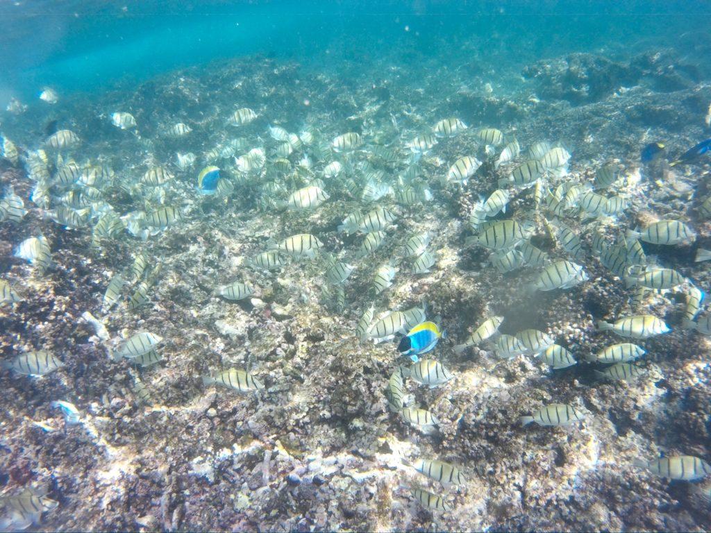 poissons, seychelles, snorkeling
