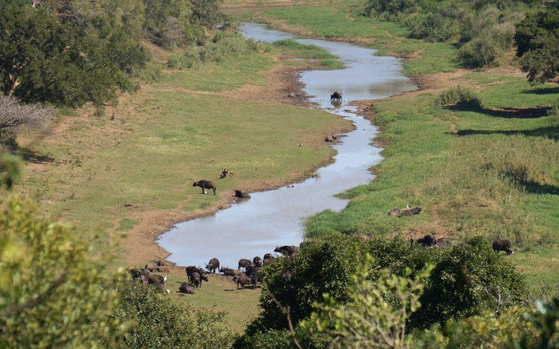 parc hluhluwe imfolozi, afrique du sud