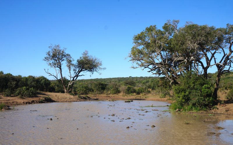point d'eau, parc hluhluwe imfolozi, afrique du sud