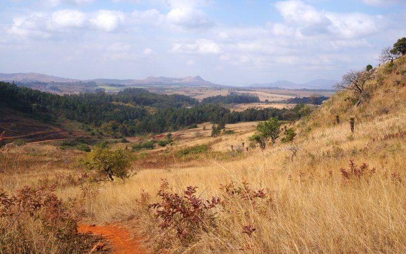 Old jeep track, Mlilwane wildlife sanctuary, Swaziland
