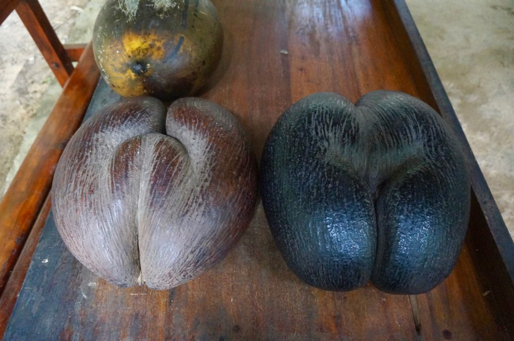 coco fesse, praslin, seychelles