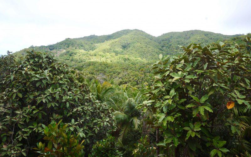 belvédère, vallée de mai, praslin, seychelles