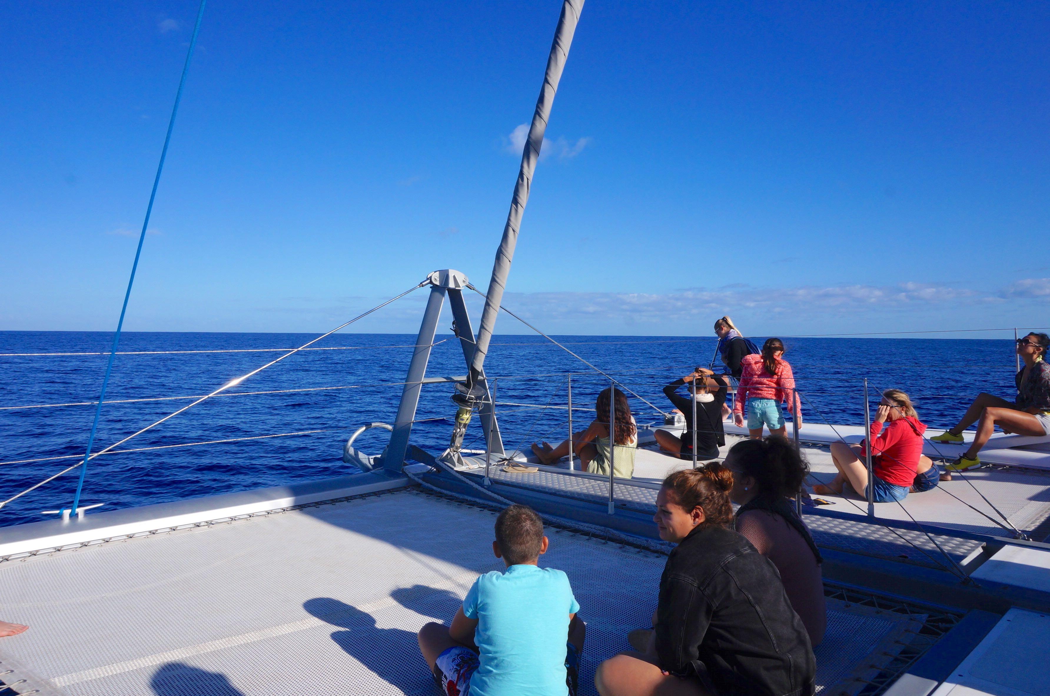 catamaran, baleine à bosse, île de la réunio